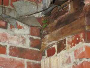 In case you still don't believe that leakage around the chimney was the major problem, here's proof: this is a plant that is growing INSIDE the house, under the roof, in a nook of the chimney. Nice.
